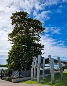 The Leichhardt Tree, over 160 years old