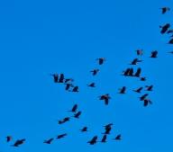 Noisy Birds
