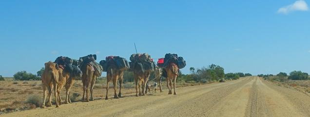 1 dog, 2 humans, 6 camels