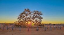 Sunrise at the Lone Gum Tree