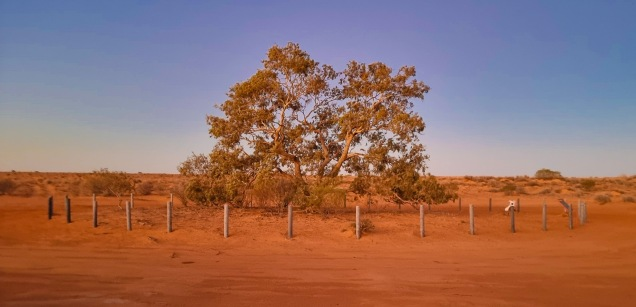Sunset at the Lone Gum Tree